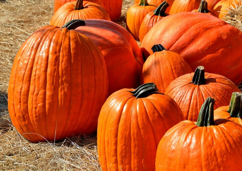 [/userfiles/files/pumpkins-1572864_960_720.jpg]